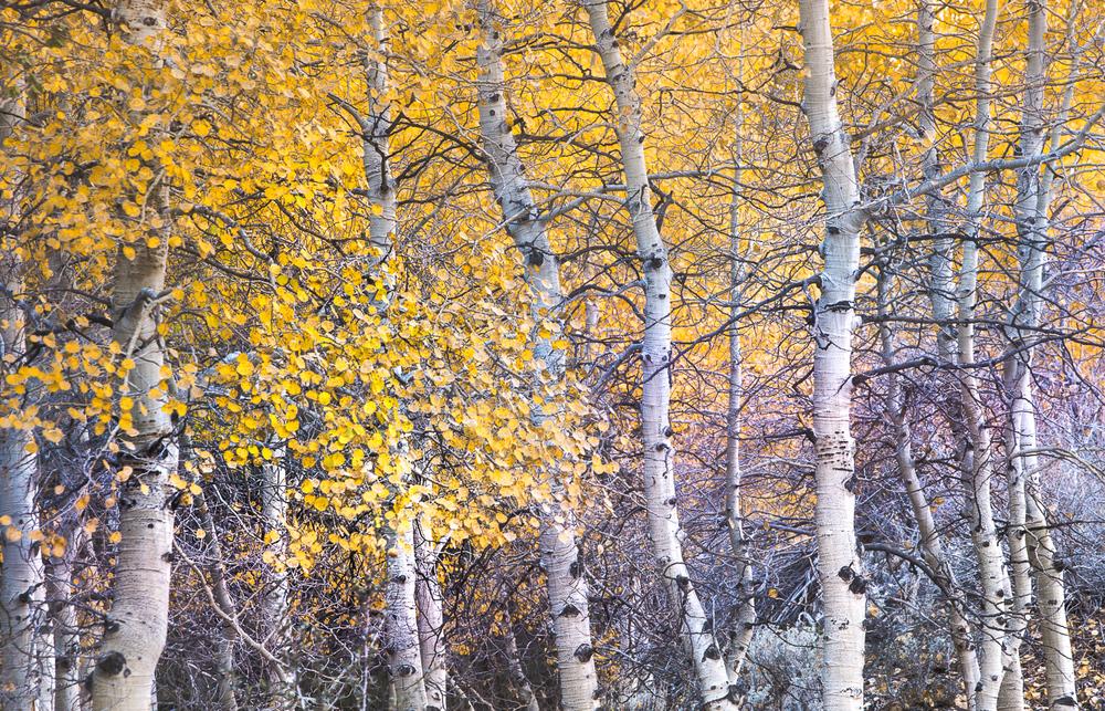grant-longenbaugh-Eastern-Sierra-21.jpg
