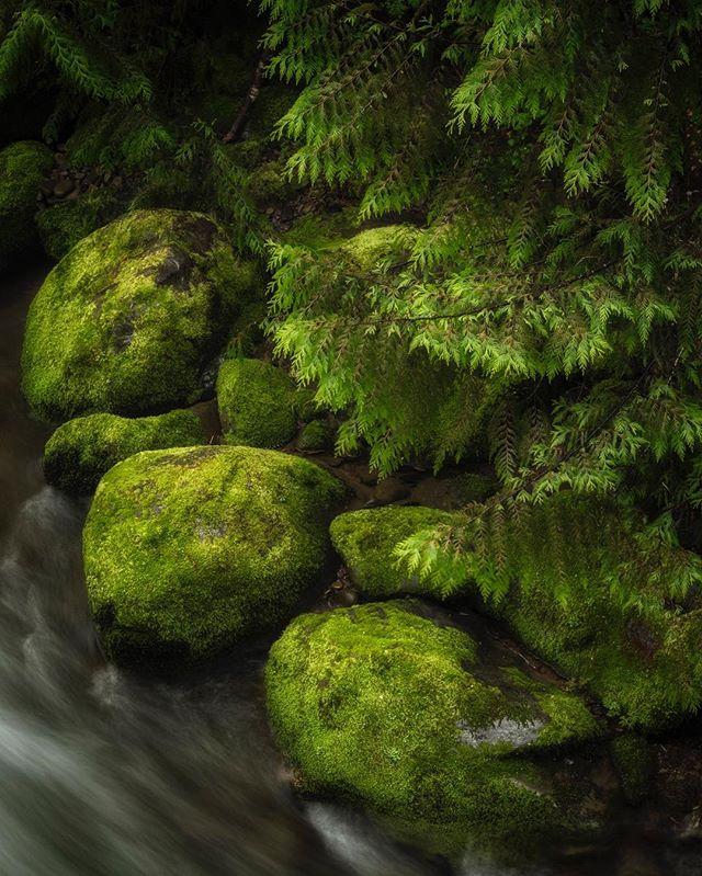 Moss and water, water and moss. #pnw #rainforest #olympicpeninsula #pnwonderland #olympicnationalpark #pnwphotographer #upperleftusa
