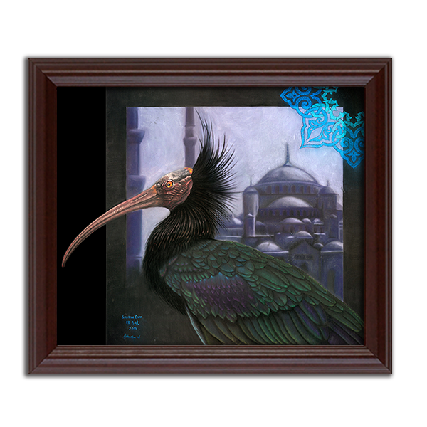 Northern Bald Ibis & Blue Mosque