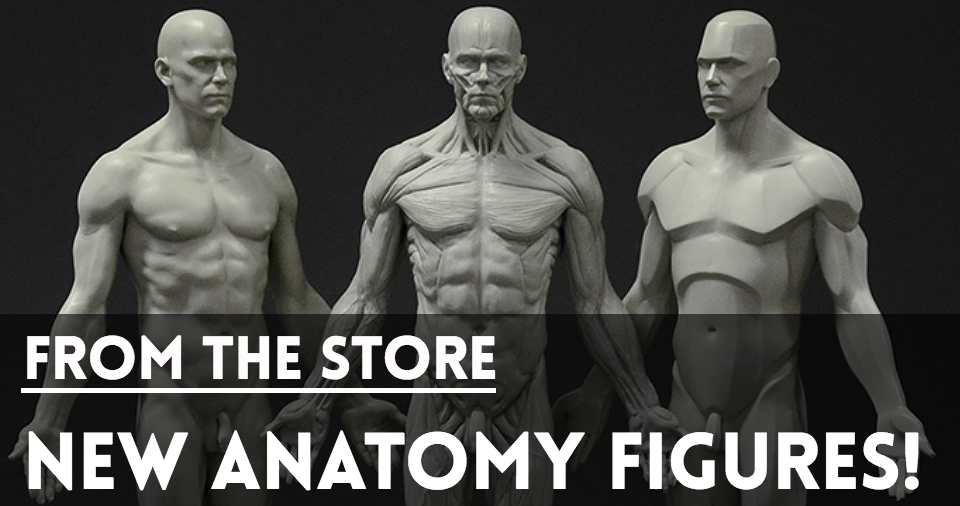 Website-Covers-StoreFront-AnatomyFigures.jpg
