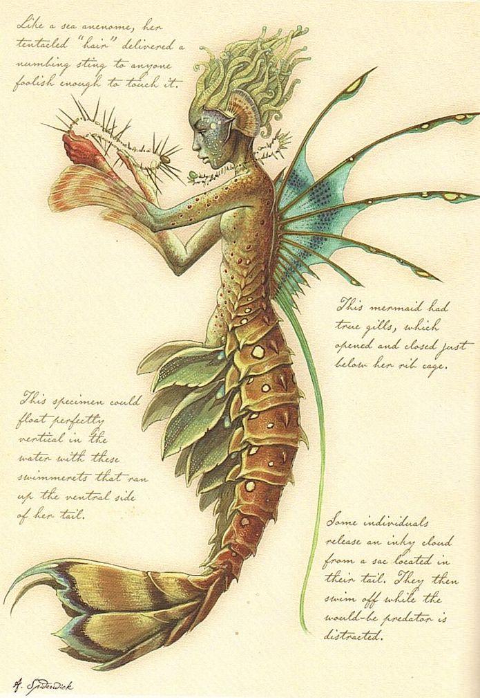 0592b1b03300bde2b36247ad3013ee4f--mermaid-illustration-illustration-tumblr.jpg