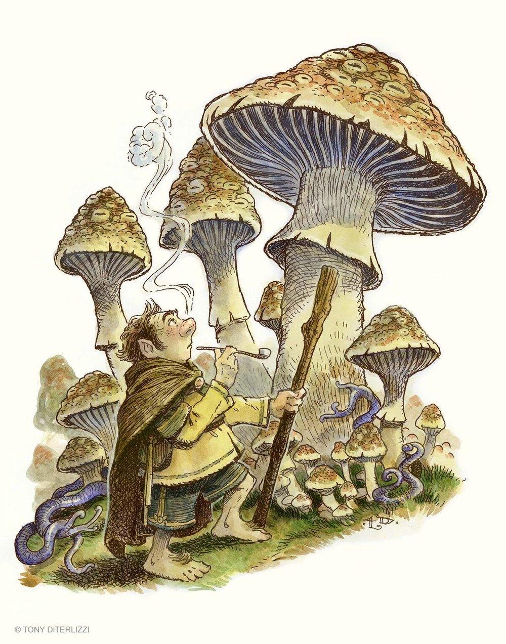 2014_Fungi.jpg