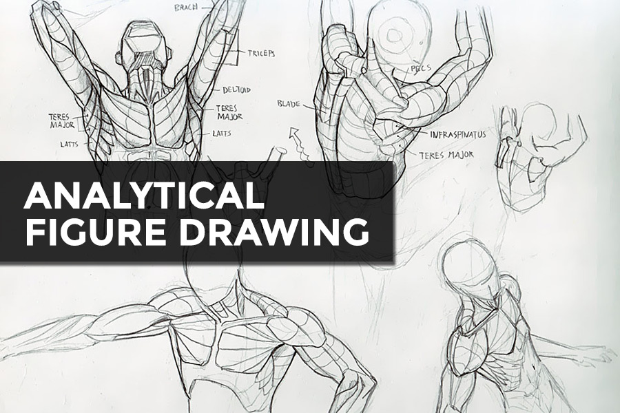 - This course will emphasize a process based approach focusing on the analysis of form, construction, perspective and will offer an in depth study of the figure while always maintaining a grounding in the artistic and principles of design..