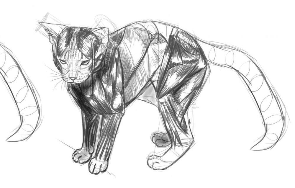 Animal Drawing -