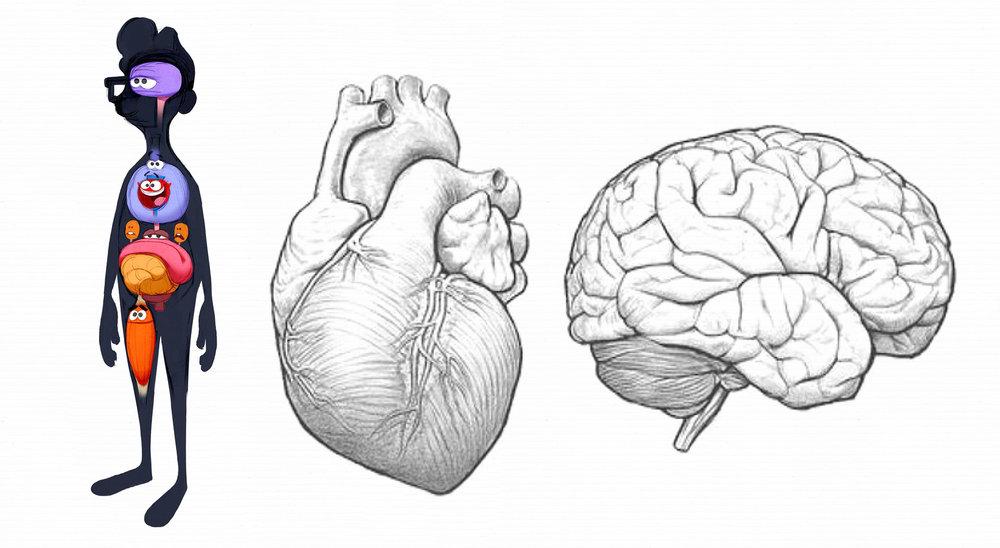 Organs2.jpg