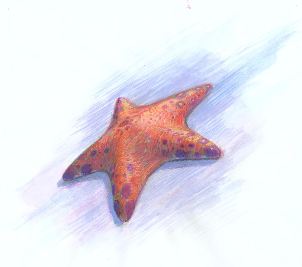 FishTank6.jpg