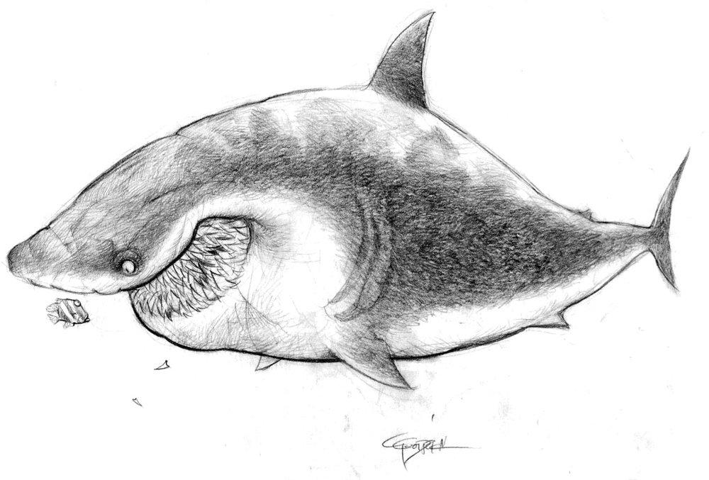 nemo-Shark1-1.jpg