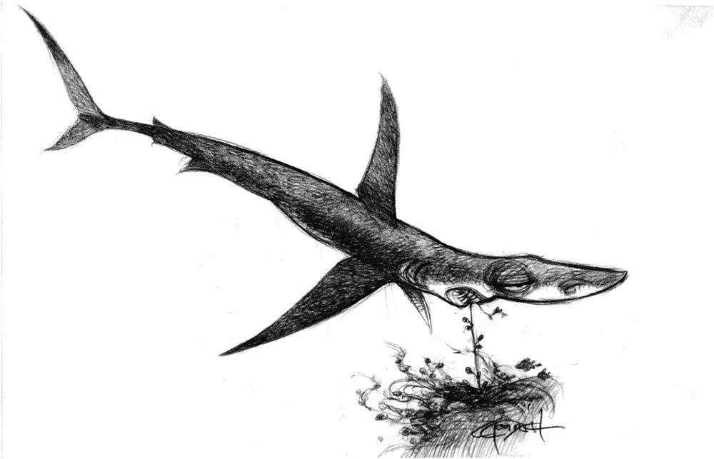 nemo-Shark2-1.jpg