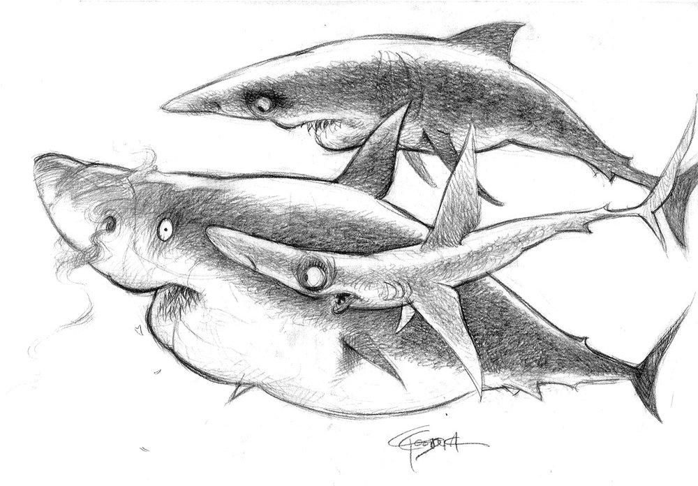 nemo-Sharks1-429-1.jpg