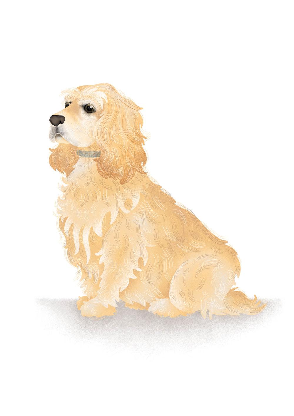 HANNAH WEEKS-DOG PORTRAIT-FOR-HAZEL-A4.jpg