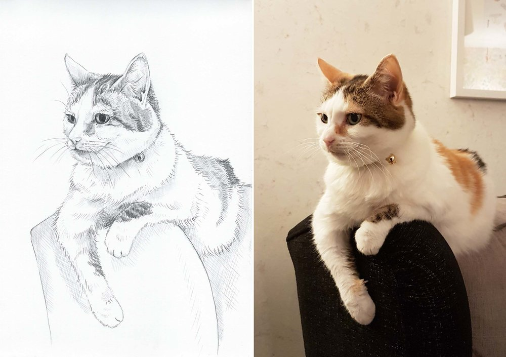 Swapping digital painting, for a pencil and paper, to draw my lovely Bessy.