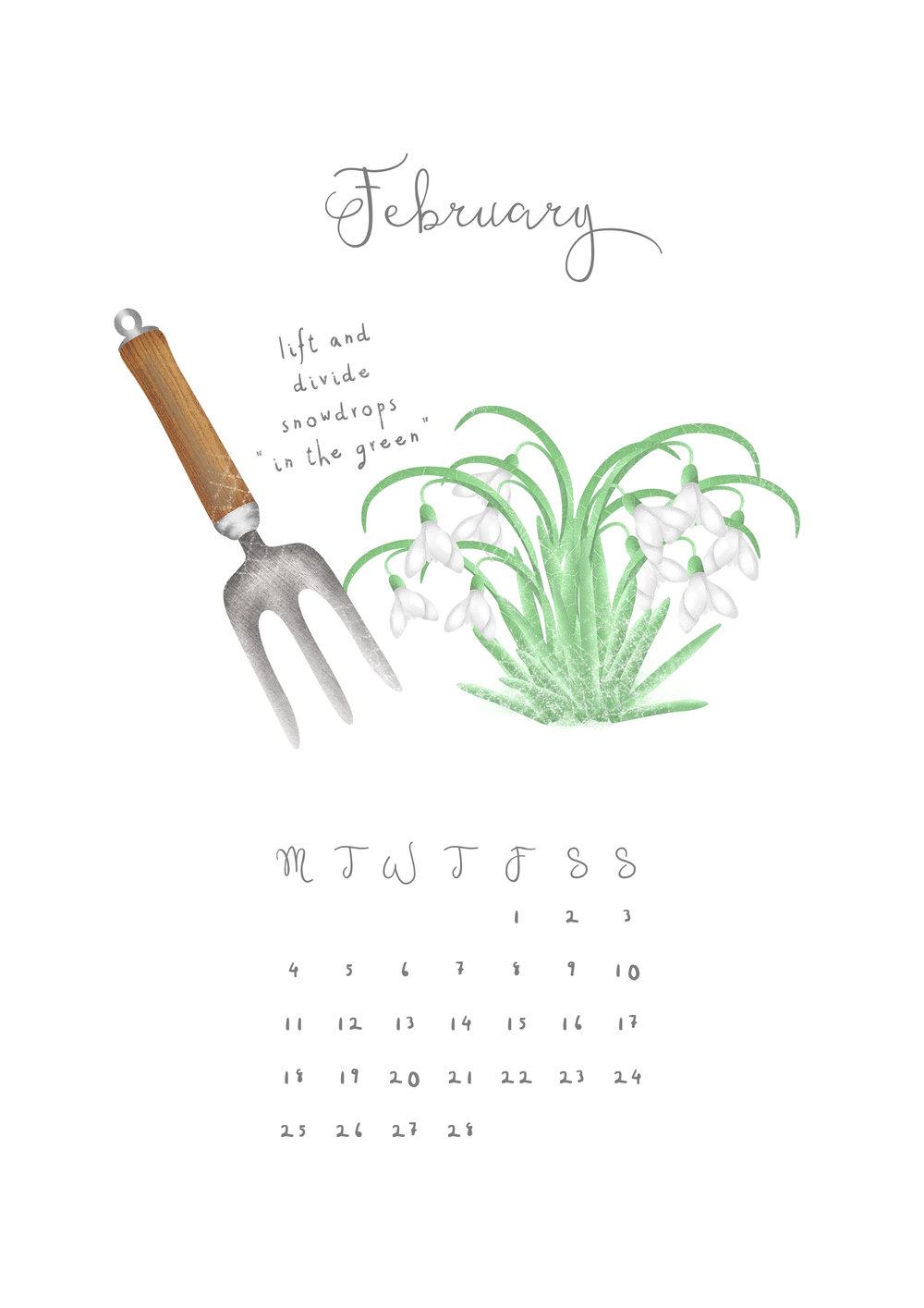 Hannah Weeks Illustration - February - Divide Snowdrops - A4.jpg