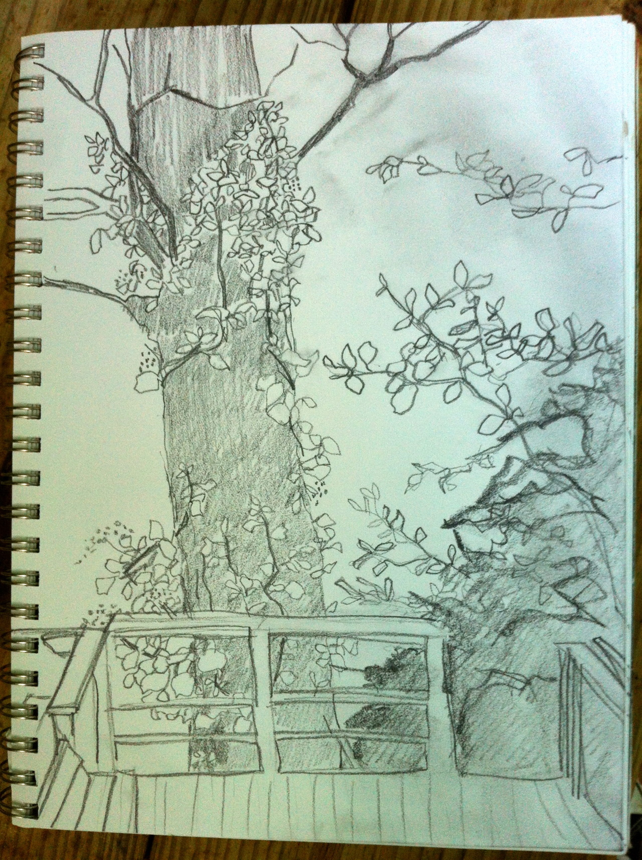 Sketch from the treehouse.