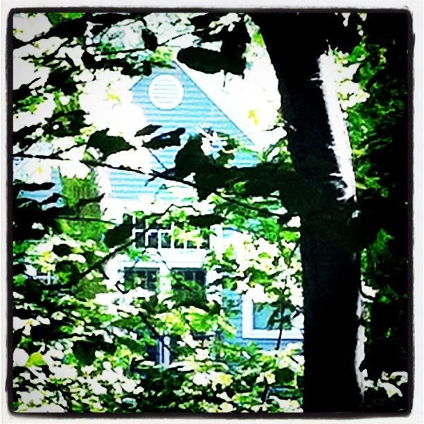 Compositional idea - Collapsing space, architectural elements seen through the woods.