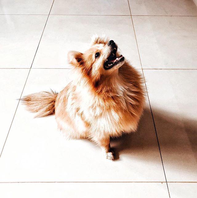 Riding into 2019 like... 🤞🏻🙌🏻 • cheers to the 365 opportunities • 🥂  Meu conselho pra esse ano: não vamos esperar até o carnaval pra começar esse ano! Há muito o que ser feito! ♾ . . . #apollopeanut #hyggelife #2019 #discipline #focus #workhard #plenitude #equilibrio #morningmiracle #goals #sucesso #bestversionofyou #buenohaus #hyggehome #hyggemoment #resolutions #spitzlovers #spitzalemao #dogsofinstagram