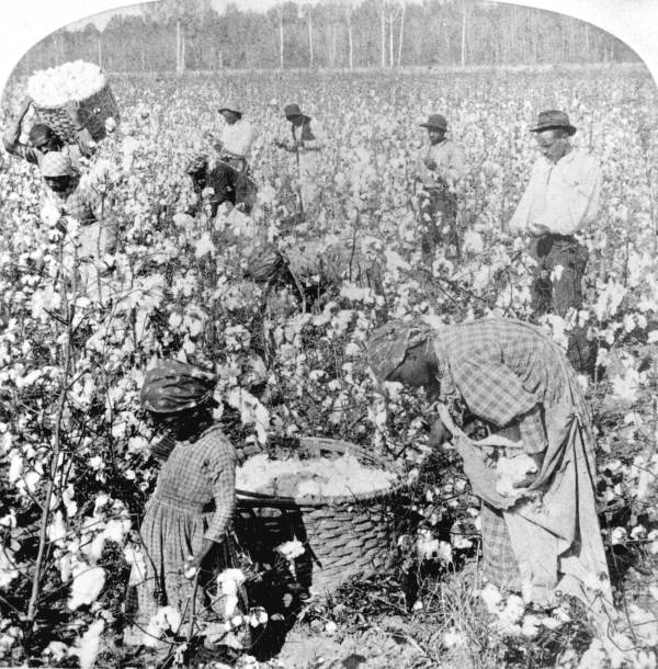 Plantation scene of laborers picking cotton in Florida. 18--. Black & white photo print, State Archives of Florida, Florida Memory. Available  here