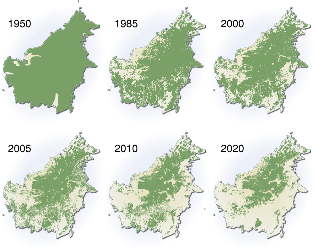 Het verval van het regenwoud op Borneo sinds 1950 en hoe het zou gaan als er niets gedaan wordt.