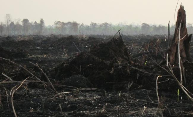 photo1_indonesia_fires.jpg