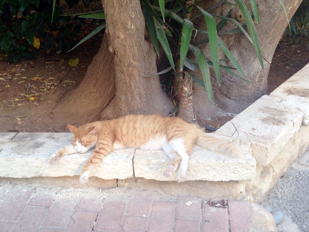 Even the hardened wild cats tire of the heat!