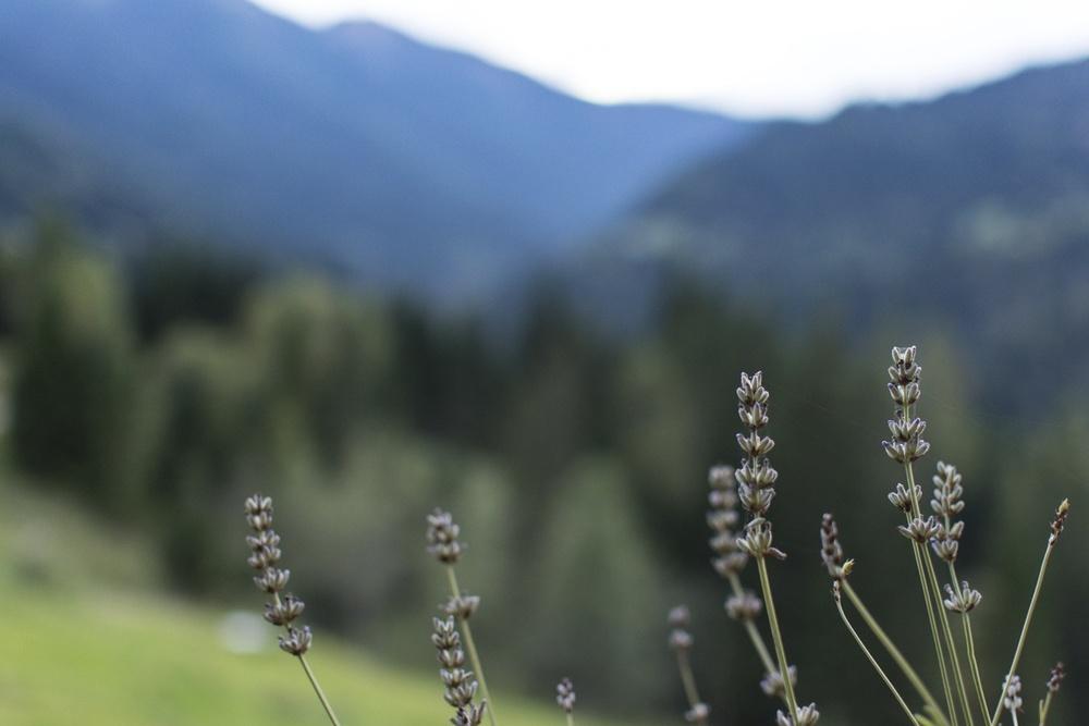 Austria_VeerleSymoens_small-8750.jpg