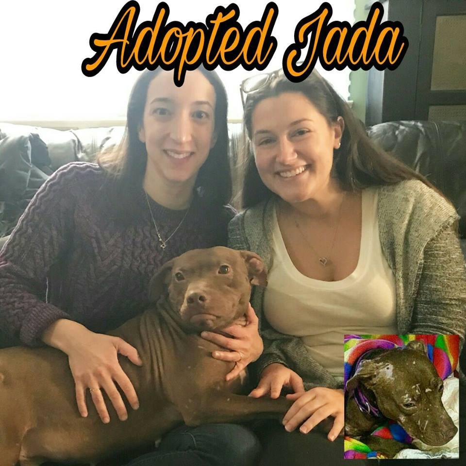 AdoptedJada.jpg