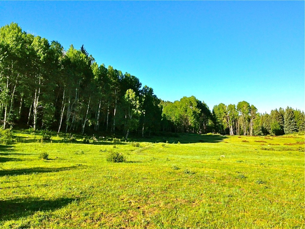 pagosa springs hunting land for sale