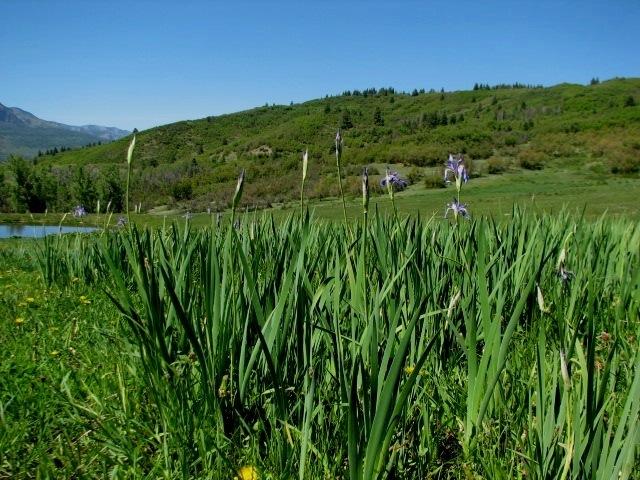 Pagosa Springs - Continental Divide Ranch