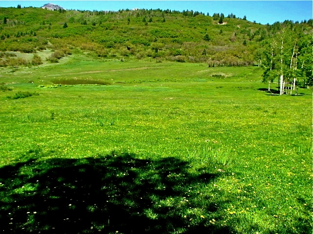 Land for sale in Pagosa Springs, CO
