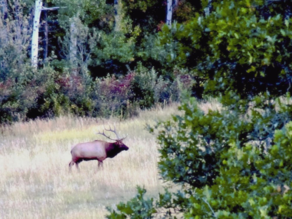 Elk hunting property