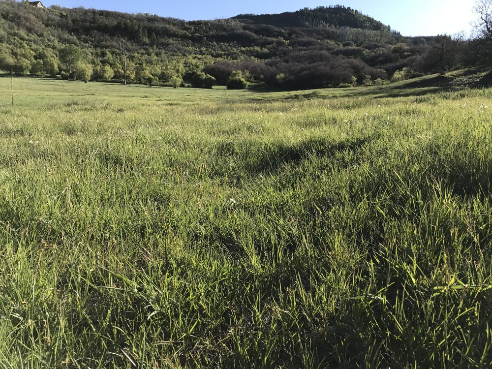 Ranch and Farm land