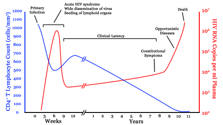 HIV Time Course. Image Source: Wikimedia Commons