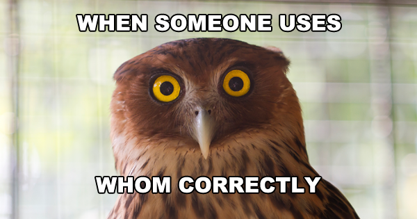 "Get it? Cause it's an owl. Owls say ""who"" (Image)"