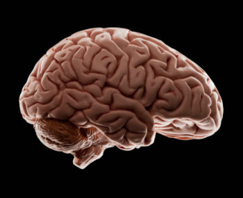 If you can't tell, this is a picture of your clinical brain. ( Image )