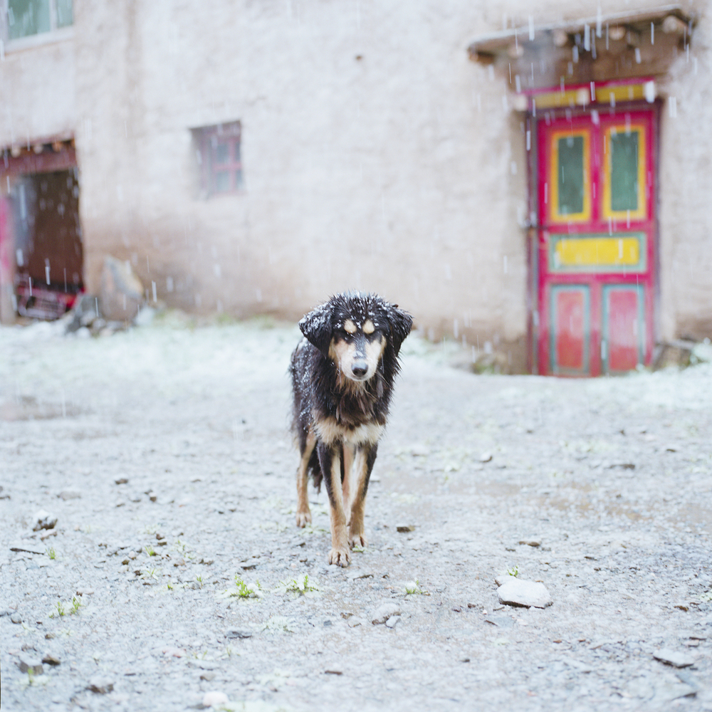 Rinchenlucy25.jpg