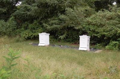 Two of the bee hives situated next to the meadow.