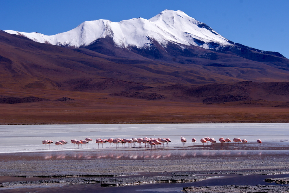 Flamingos on an icy lake in the mountain ranges surrounding the Salar de Uyuni salt flats in Bolivia.