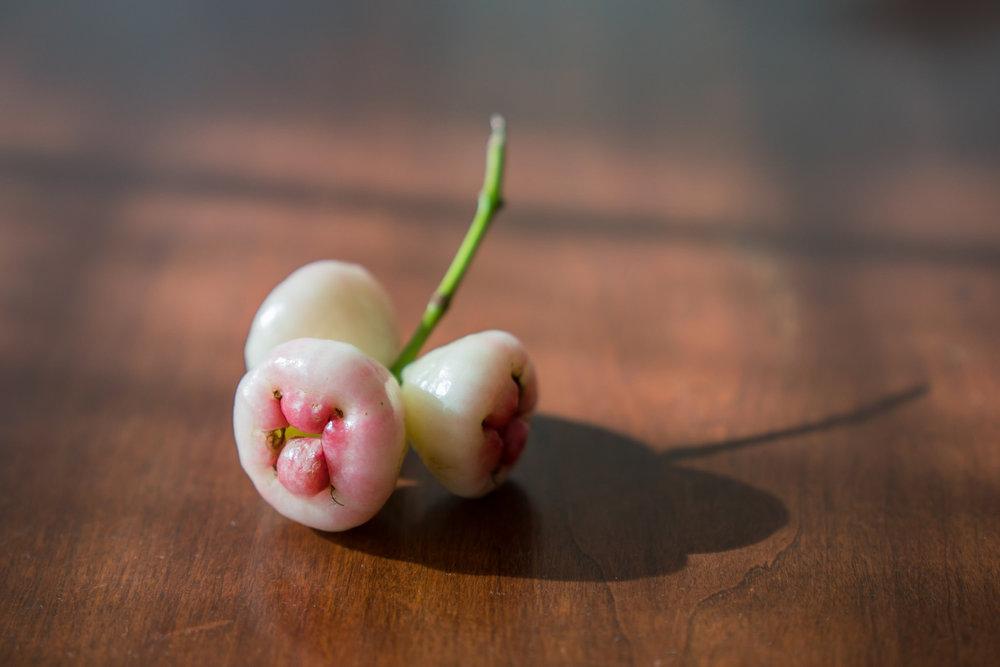 Jambika, also known as white rose apple,Kerala, India