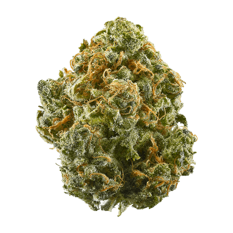 Blue Dream - Blue Dream is widely potent but accessible to both novice and experienced smokers. Popular for its giant, terpene-sparkling nuggets as well as its soft blue-raspberry taste.LEARN MORE