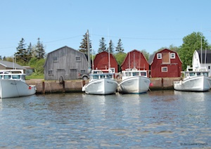 Malpeque-wm