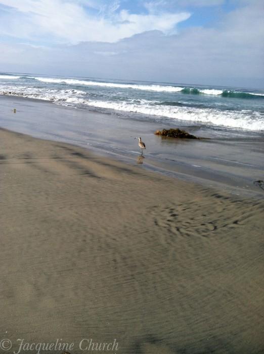 Torrey Pines Beach