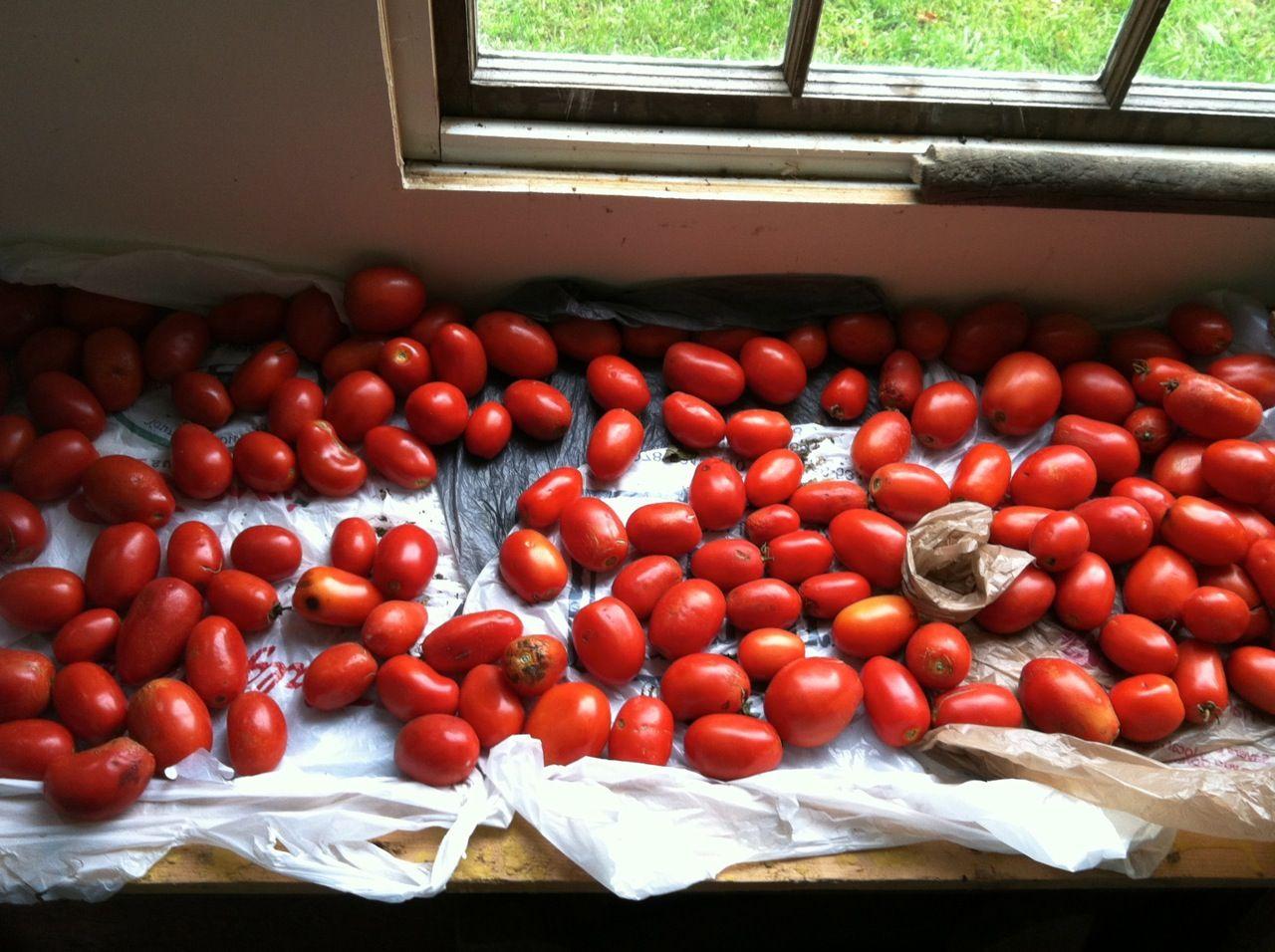 plum tomatoes