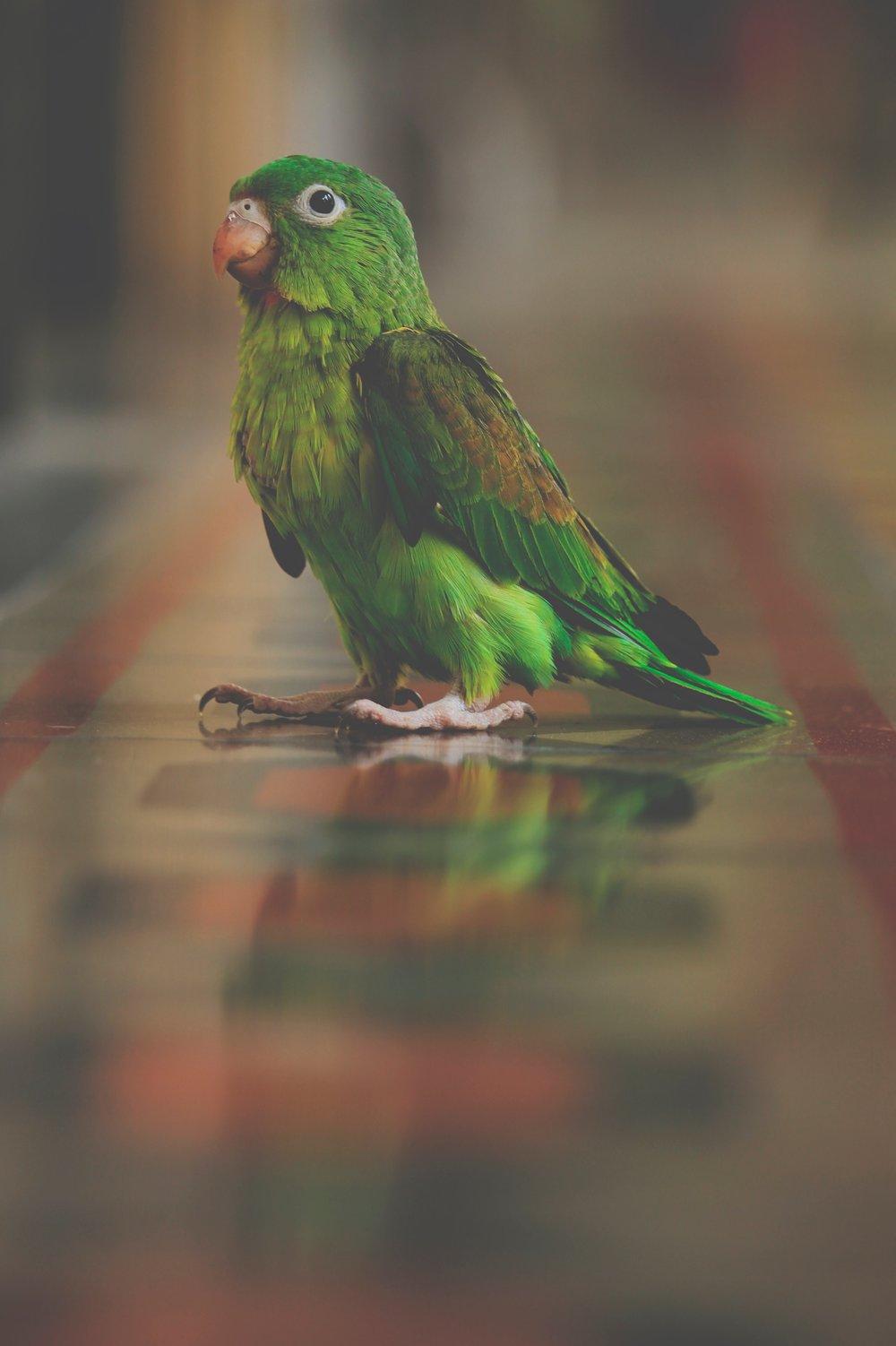 Pretty Bird.jpg