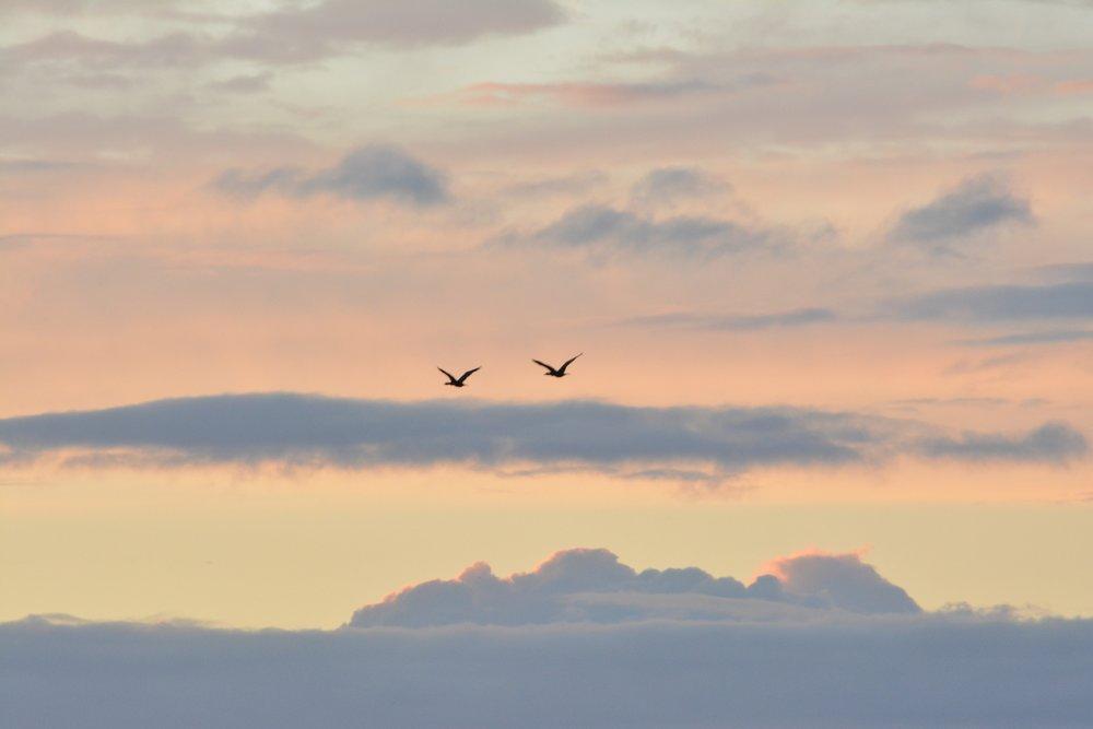 Bye Geese.jpg