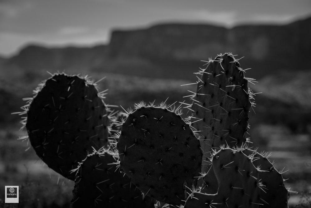 Justin Ruiz Photography_DSF3049.jpg