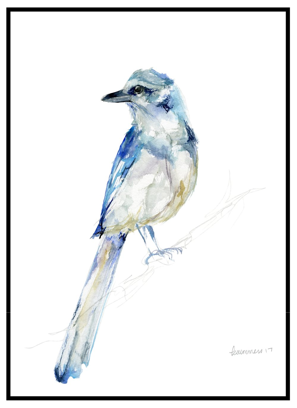 florida scrub jay - archbold biological station  The Florida Scrub Jay Legacy Print was introduced in April 2018.  Ten percent of the proceeds from the Scrub Jay sales is donated to the  Archbold Biological Station .  Archbold Biological Station is an independent research institution located in central Florida.  The Station provides valuable long-term ecological research that provides insight into Florida's environmental state, and benefits countless species including the Florida scrub jay, Florida grasshopper sparrow, and red-cockaded woodpecker.