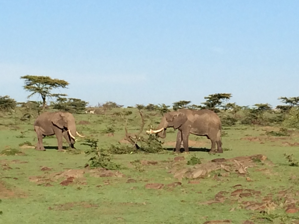 Elephants during Kenya anti-poaching trip.JPG