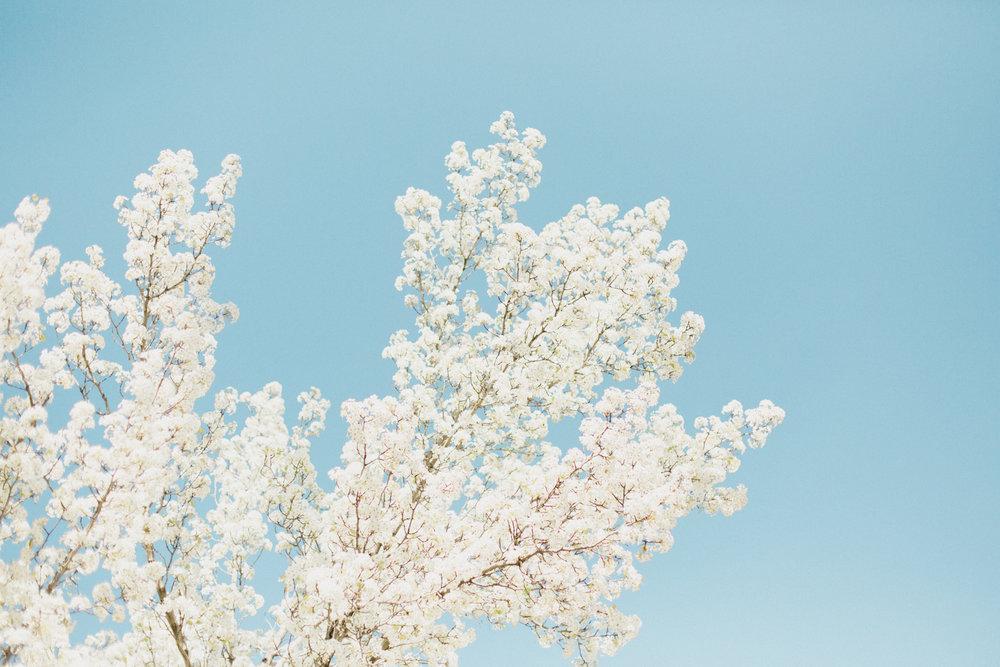 Blossoms-3.jpg