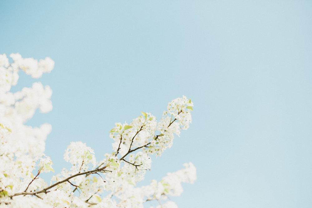 Blossoms-20.jpg