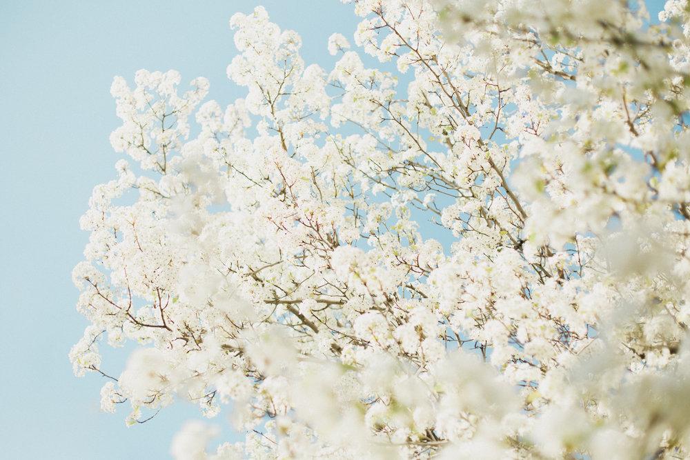Blossoms-23.jpg
