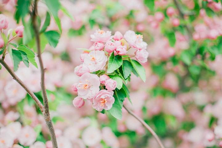 spring-3_26025278863_o.jpg